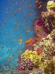 Aquarium Reef, Red Sea Hurghada by Iain Lumsden 